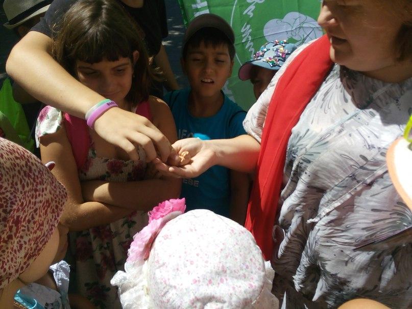 В Ейске отметили праздник семьи, любви и верности