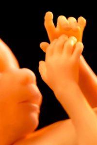 Минюст отреагировал на идею РПЦ закрепить за эмбрионом право на жизнь